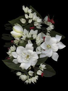 Bleeding Hearts and Gardenia by Susan S. Barmon