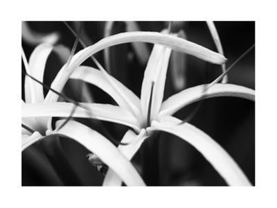 Dynamic Bloom by Susann & Frank Parker