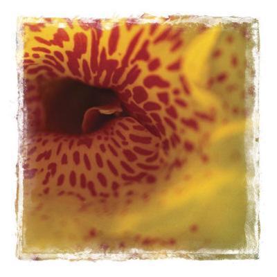 Flower Power II by Susann & Frank Parker