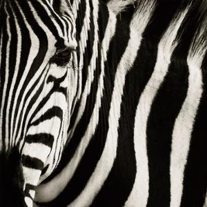 Camouflage I by Susann Parker