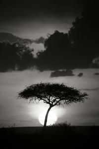 Kenta Sunrise BW by Susann Parker
