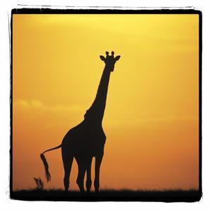 Radiant Africa 1 by Susann Parker