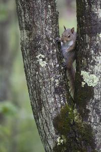 Squirreling Around by Susann Parker