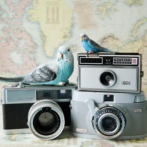 Budgie Photo Bomb by Susannah Tucker