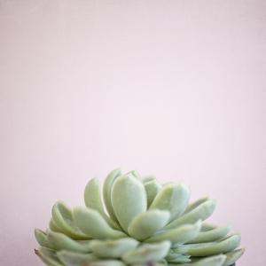 Desert Flora 1 by Susannah Tucker