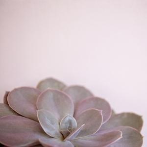 Desert Flora 2 by Susannah Tucker