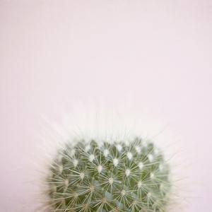 Desert Flora 3 by Susannah Tucker
