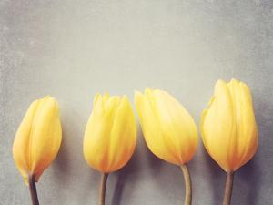 Four Yellow Tulips Against a Textured Grey Blue Background by Susannah Tucker