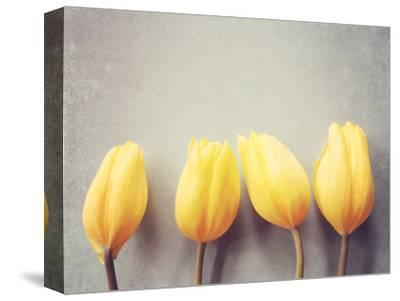 Four Yellow Tulips Against a Textured Grey Blue Background