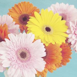 Happy Daisies by Susannah Tucker