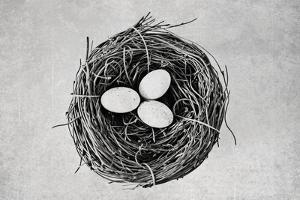 Nest by Susannah Tucker