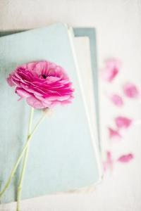 Pink Flower with Books by Susannah Tucker