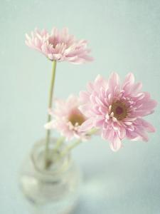 Pretty in Pink by Susannah Tucker