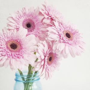 Pretty Pink Daisies by Susannah Tucker