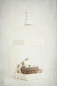 Small Birdcage by Susannah Tucker