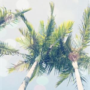 Sun Speckled Palm Trees by Susannah Tucker