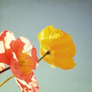Sweet Memories by Susannah Tucker