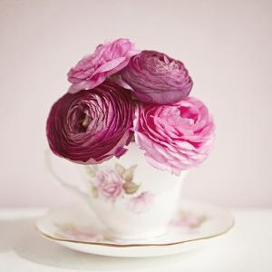 Tea Cup Posies by Susannah Tucker