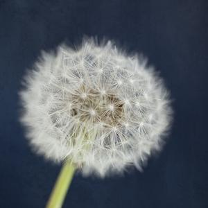 Wish Garden by Susannah Tucker