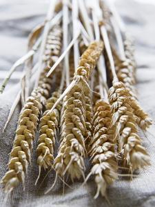 Ears of Rye on a Linen Cloth by Susanne Casper-zielonka