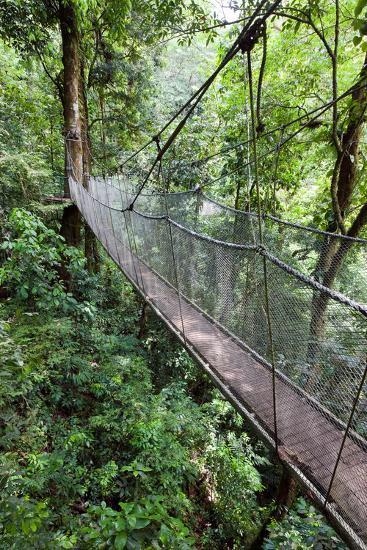 Suspension Bridge, Rainmaker Conservation Project, Costa Rica-Susan Degginger-Photographic Print