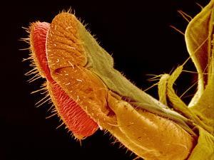 Fly Proboscis, SEM by Susumu Nishinaga