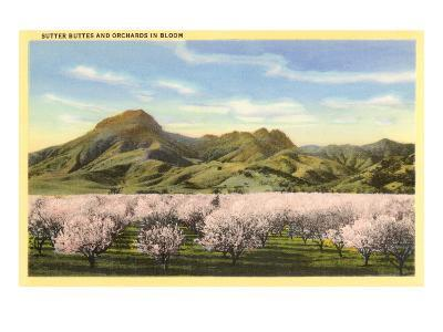 Sutter Buttes and Orchards in Bloom--Art Print