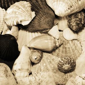 Sea Shells by Suzanne Foschino