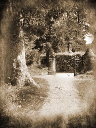 Wicklow Tree Line B