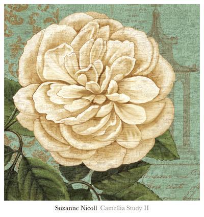 Camellia Study II