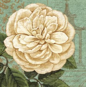 Camellia Study II by Suzanne Nicoll