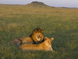 African Lion (Panthera Leo) Male and Female, Masai Mara, Kenya by Suzi Eszterhas/Minden Pictures
