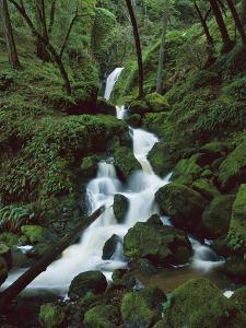 Falls on Cataract Creek, after a Winter Storm, Mount Tamalpais State Park, California by Suzi Eszterhas/Minden Pictures