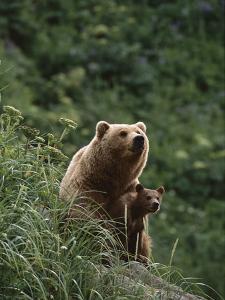 Grizzly Bear (Ursus Arctos Horribilis) Mother and Cub, Katmai Nat'l Park, Alaska by Suzi Eszterhas/Minden Pictures