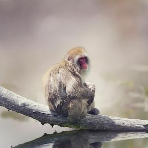 Japanese Macaque on a Log by Svetlana Foote