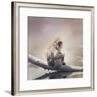 Japanese Macaque on a Log