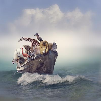 Wild Animals and Birds in an Old Boat