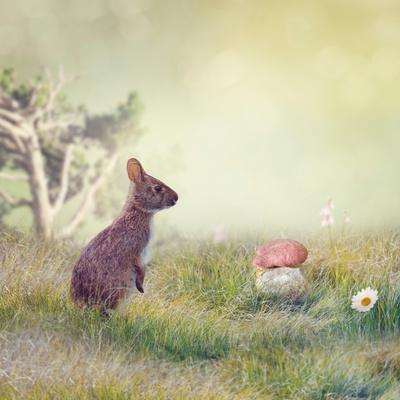 Wild Rabbit Standing Up in the Grass