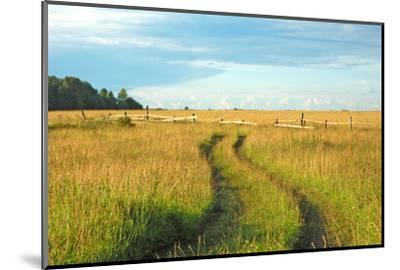 View of Pasture in Northern Russian Village with Earth Road by svic
