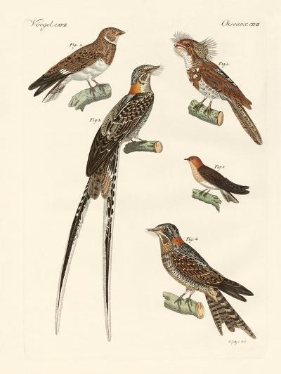 Swallow-Like Birds--Giclee Print