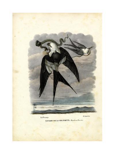 Swallow-Tailed Kite, 1863-79-Raimundo Petraroja-Giclee Print