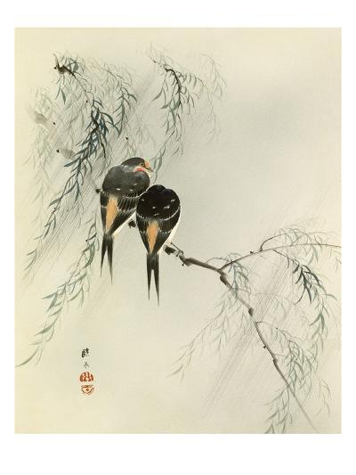Swallows in Salix--Giclee Print