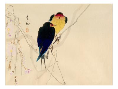 Swallows with blossom--Giclee Print