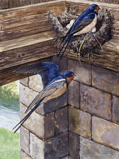 Swallows-English School-Giclee Print
