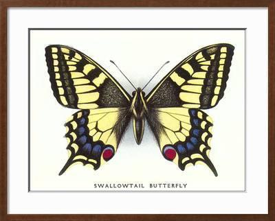 Swallowtail Erfly Art Print