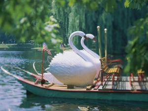 Swan Boats in a Lake, Boston Common, Boston, Massachusetts, USA