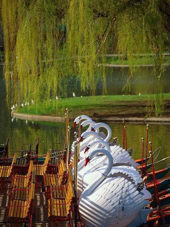 https://imgc.artprintimages.com/img/print/swan-boats-the-public-garden-boston-ma_u-l-p3h71h0.jpg?p=0