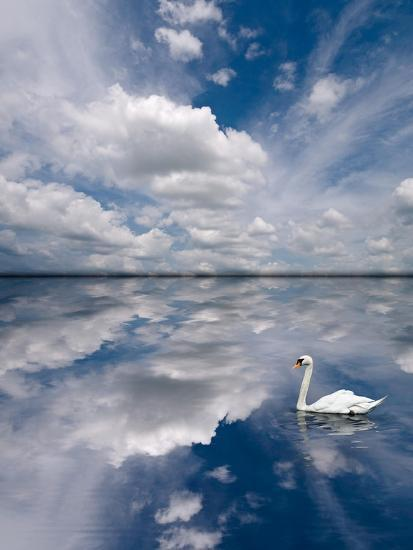 Swan Lake Explorations-Steve Gadomski-Photographic Print