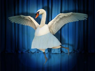 Swan Lake-J Hovenstine Studios-Giclee Print