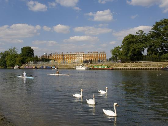 Swans and Sculls on the River Thames, Hampton Court, Greater London, England, United Kingdom-Charles Bowman-Photographic Print